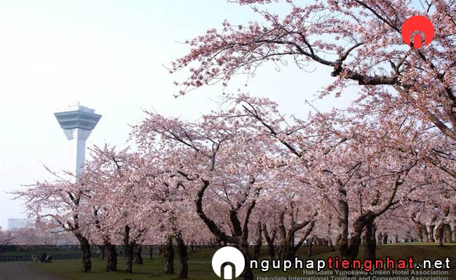 Những địa điểm ngắm hoa anh đào ở Nhật, Du lịch Hokkaido