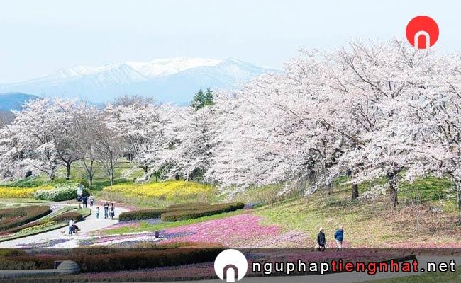 Những địa điểm ngắm hoa anh đào ở Nhật, Du lịch Touhoku