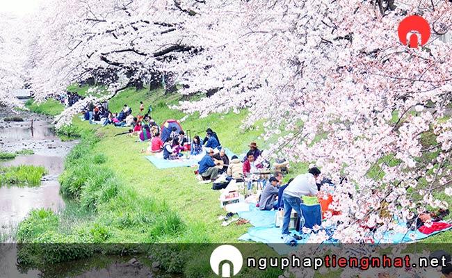 Những địa điểm ngắm hoa anh đào ở Nhật, Du lịch Kantou