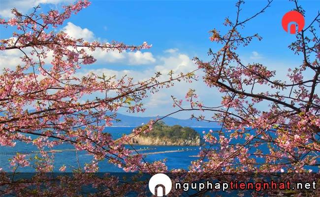 Những địa điểm ngắm hoa anh đào ở Nhật, Du lịch Kyuushuu và Okinawa